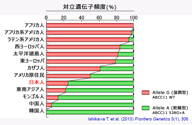 25世界規模におけるヒトABCC1