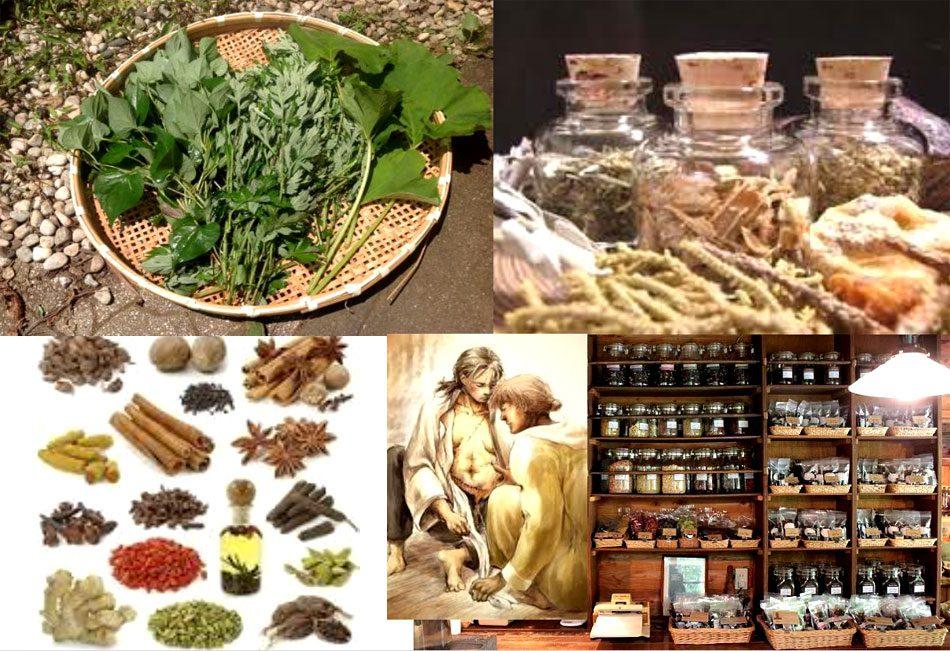 28現生人類による薬草の発見