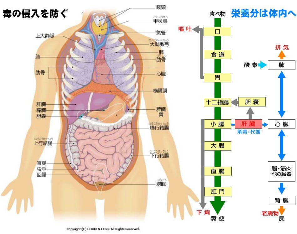 30嘔吐と下痢は生体防御
