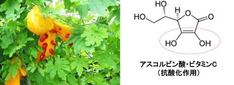抗酸化成分1