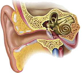 24-1ヒトの耳垢