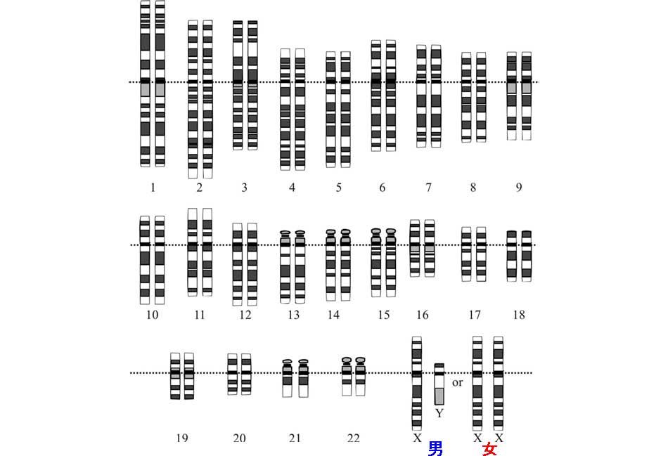 %e4%ba%ba%e9%a1%9e%e3%81%ae%e6%9f%93%e8%89%b2%e4%bd%93%e9%81%ba%e4%bc%9d%e6%83%85%e5%a0%b1%e3%82%92%e4%bf%9d%e6%8c%81