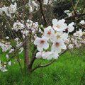 櫻・春の風景